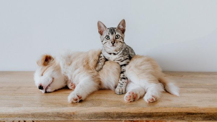 Приговор живодеру: пять лет за девять кошек
