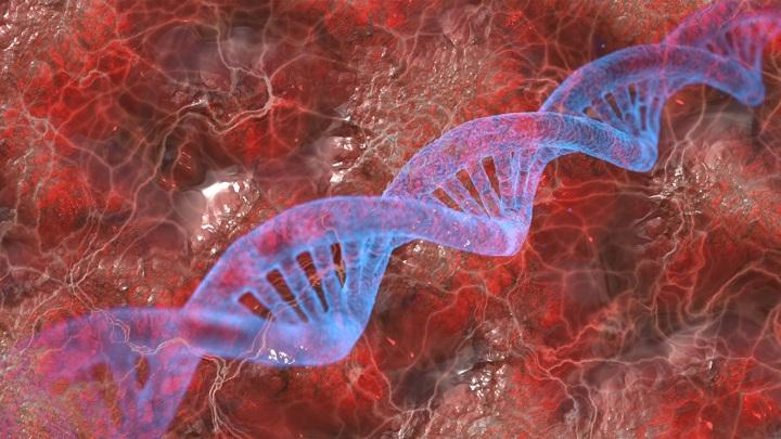 В ДНК современного человека учёные обнаружили следы неизвестных видов.