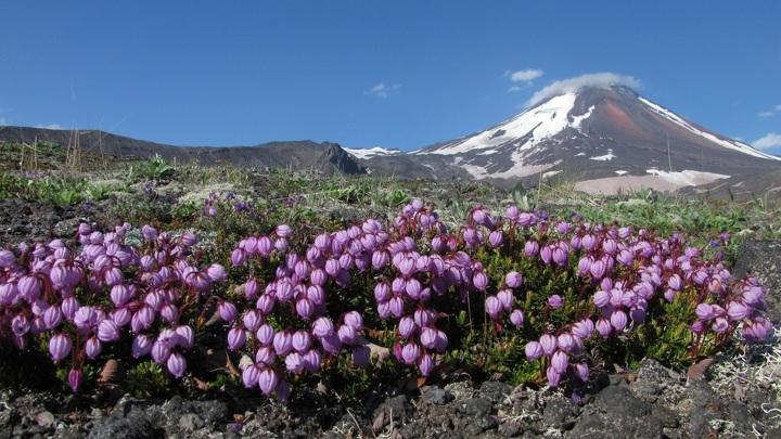 Вулканы Камчатки составляют часть Тихоокеанского огненного кольца.
