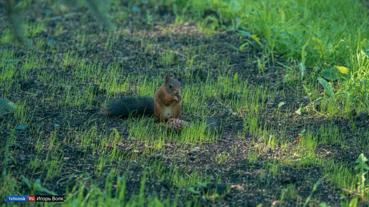 Пять зеленых зон Томска защитят от вырубки и застройки