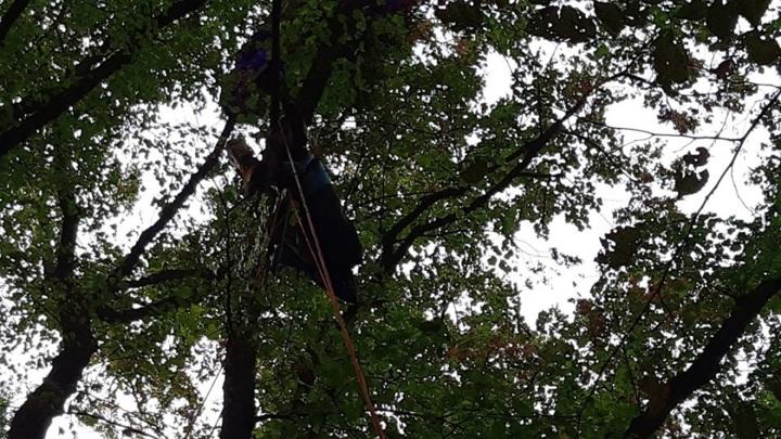 В Крыму спасли парапланериста, повисшего на дереве