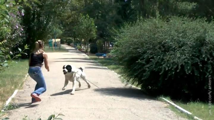 В Подмосковье алабай искусал несколько человек, но наказать хозяина пса не удается
