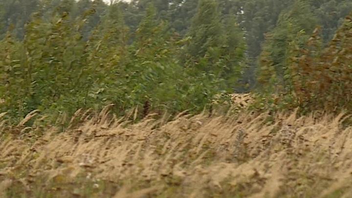В Рязанской области 300 тысяч гектаров плодородных земель заросли бурьяном