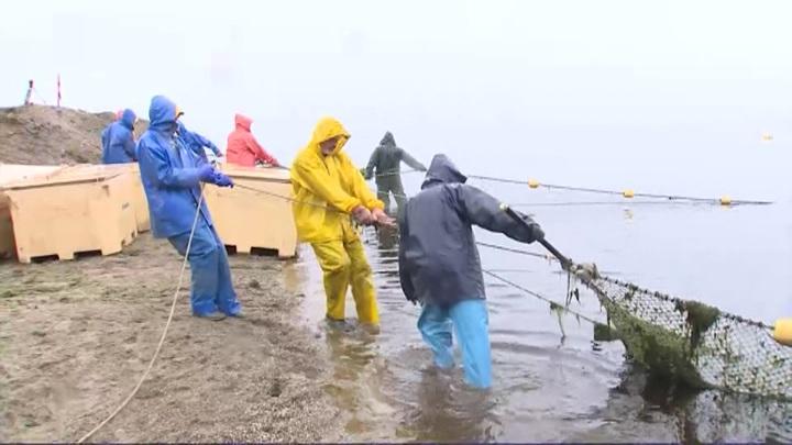 Как проходит большая рыбалка: дальневосточные промысловики взяли ударный темп