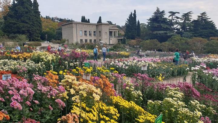 В Никитском ботаническом саду покажут 58 новых сортов хризантем