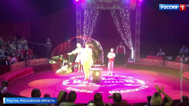 Укусил ребенка за голову: в Реутове цирковой медведь напал на людей