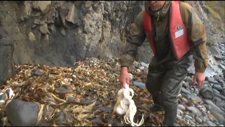 Губернатор Камчатки: в реке, впадающей в загрязненный залив, вредных веществ не обнаружено