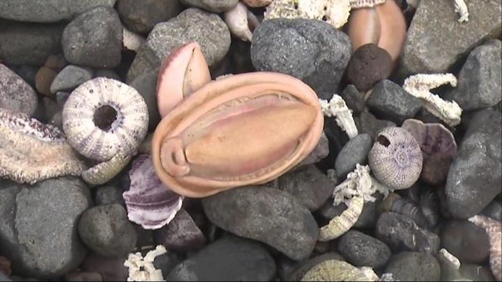 В Минприроды рассказали о первых результатах проб с загрязненной Камчатки