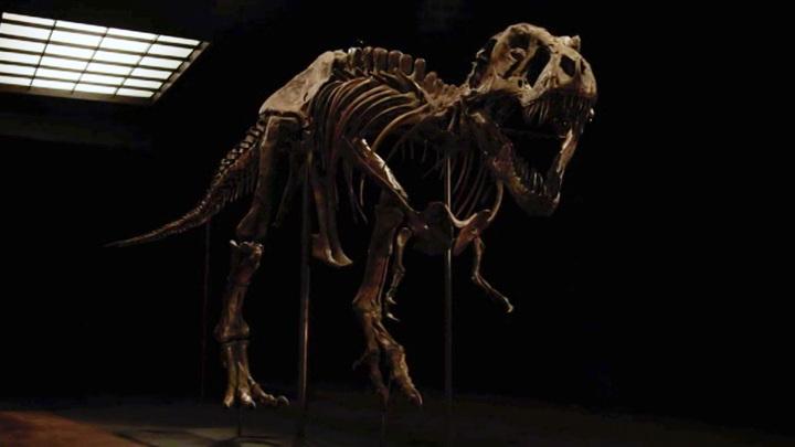 В США ушел с молотка скелет тираннозавра