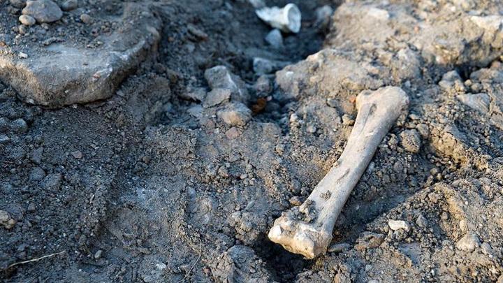 Под Воронежем найдены останки 500 детей и женщин