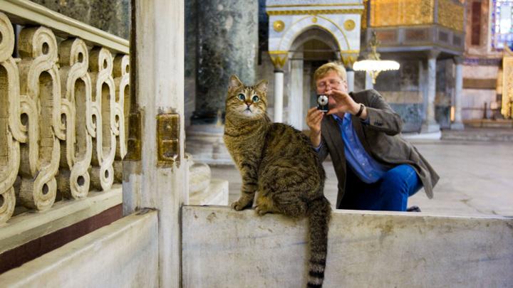 Символ Айя-Софии в Стамбуле – 16-летняя кошка Гли – умерла