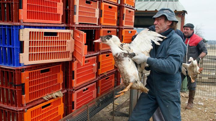 """""""Вектор"""" разрабатывает тест-системы для выявления вируса птичьего гриппа"""