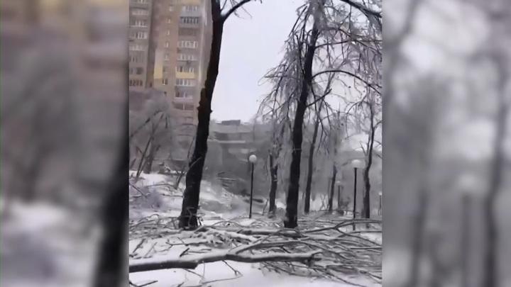 Ледяной дождь уничтожил знаменитую тополиную аллею во Владивостоке