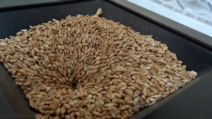 Абрамченко представила прогноз сбора зерна в России на 2021 год