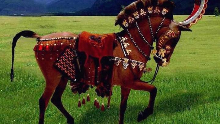 Реконструкция коня сибирских скифов