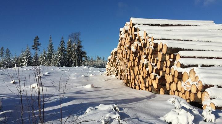 Власти создают новое регулирование в сфере лесного комплекса