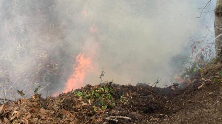 Погода помогла: в Сочи ликвидированы все лесные пожары