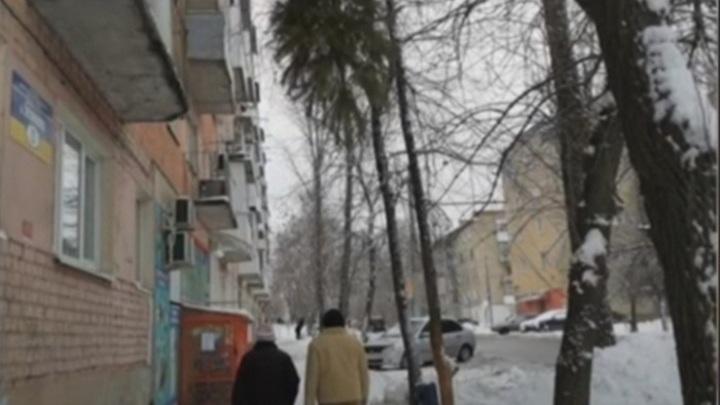 Саратовским прохожим угрожает повисшая на дереве елка