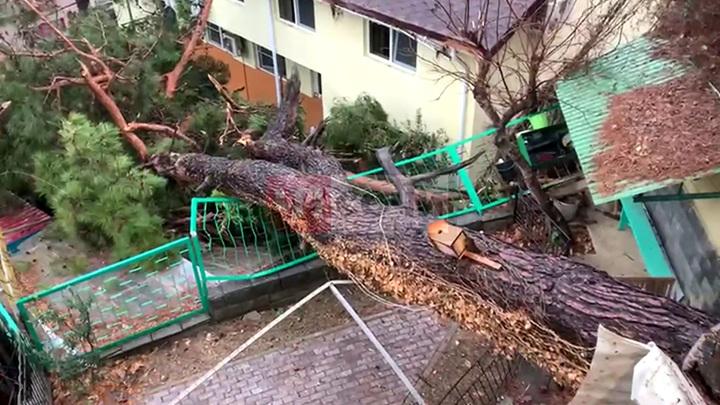 В Сочи из-за разгула стихии на дом упало дерево