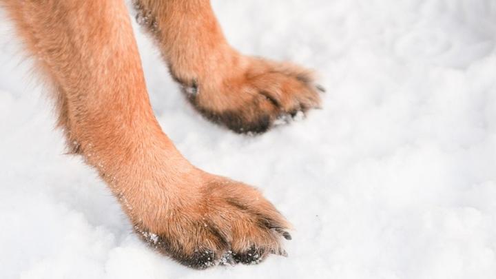 Обрабатывать лапы собак санитайзерами не рекомендуется