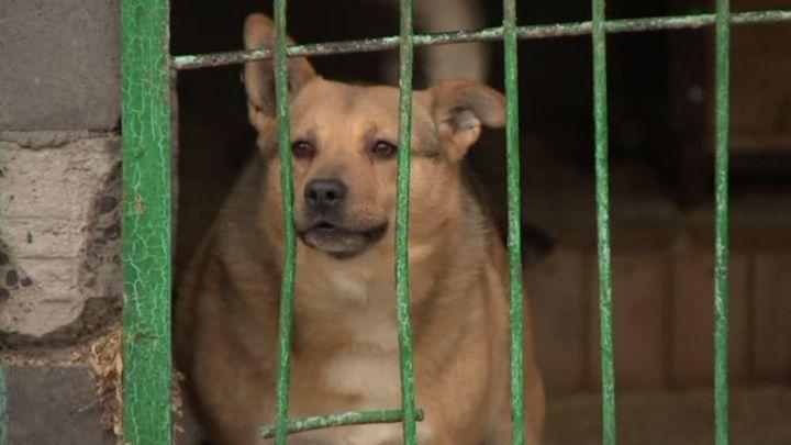В Туле на отлов бездомных животных готовы потратить рекордные 10 млн рублей