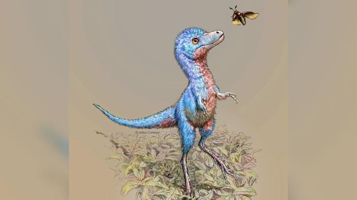 """""""Новорождённые"""" тираннозавриды были размером с крупную собаку."""