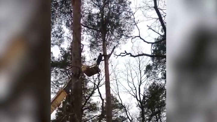 В Гвардейске спасли три дня просидевшего на дереве котенка