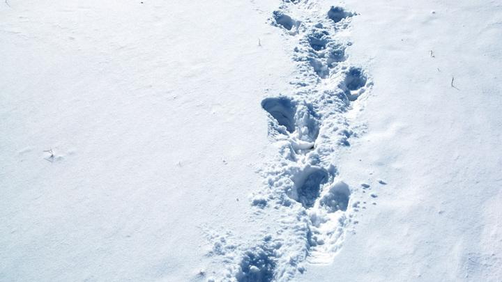 Вора по следам на снегу вычислили сотрудники новосибирской Росгвардии