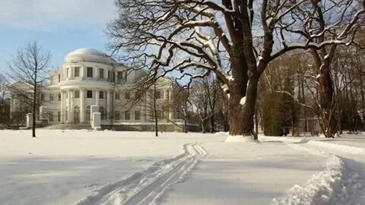 В Петербурге трехсотлетний дуб признали живым памятником