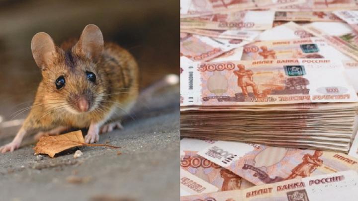 Предприимчивая костромичка пыталась погасить кредит с помощью грызунов