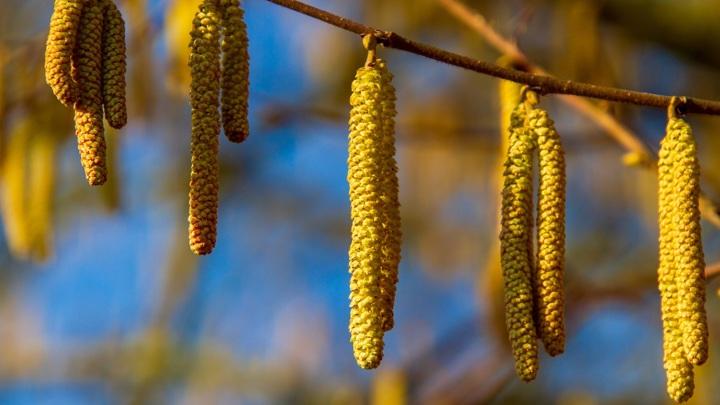 Глобальное потепление влияет на продолжительность и интенсивность цветения растений.
