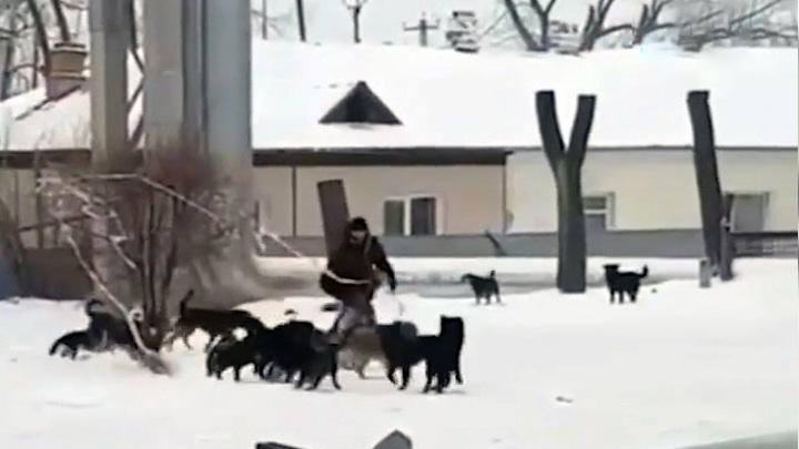 """""""Мужику на джипе респект"""": водитель внедорожника спас приморца от стаи собак"""