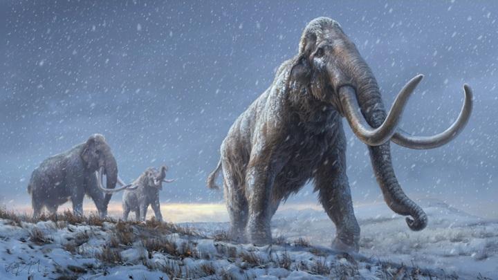 Древняя ДНК рассказала о происхождении мамонтов.