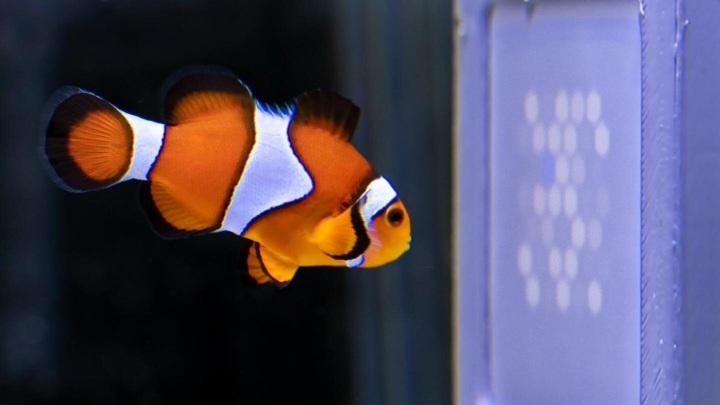Рыбы способны видеть мир в ультрафиолетовых лучах.