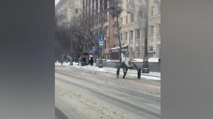 Сбежавший с ипподрома конь устроил забег по Москве