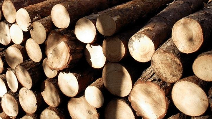 На Кубани бизнесмена подозревают в контрабанде древесины