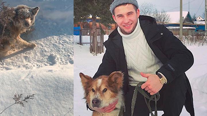 """""""Спи спокойно, друг"""": умер пес Лаки, которого житель Башкирии подобрал в 20-градусный мороз"""