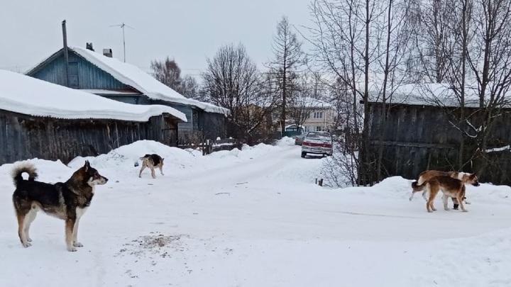 Свора бесхозных собак терроризирует жителей Устья