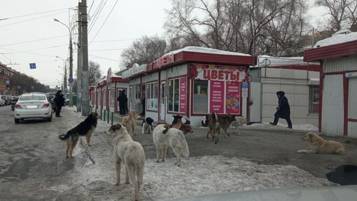 В Самаре стая собак держит в страхе жителей целого района