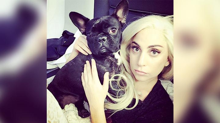 Леди Гага предложила $500 тысяч за информацию об украденных собаках
