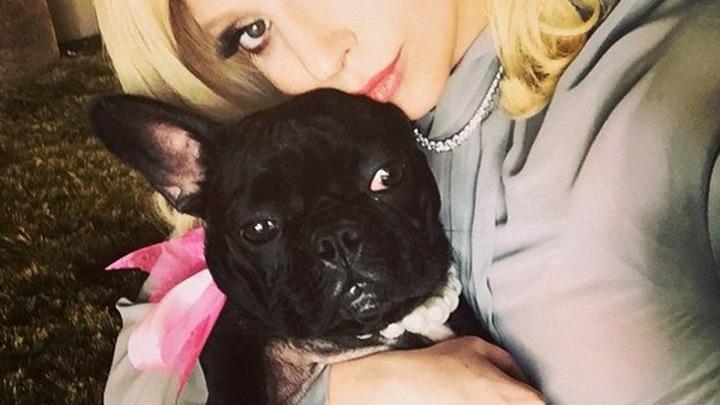 Американке, вернувшей собак Леди Гаге, может грозить срок