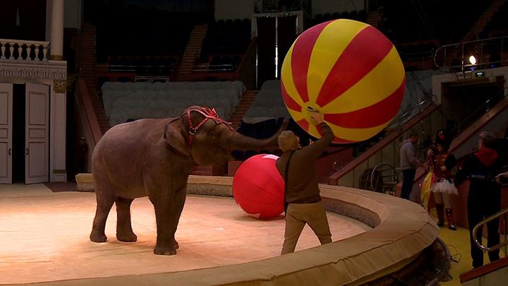 После почти годичного перерыва в Сочи возобновляется работа цирка