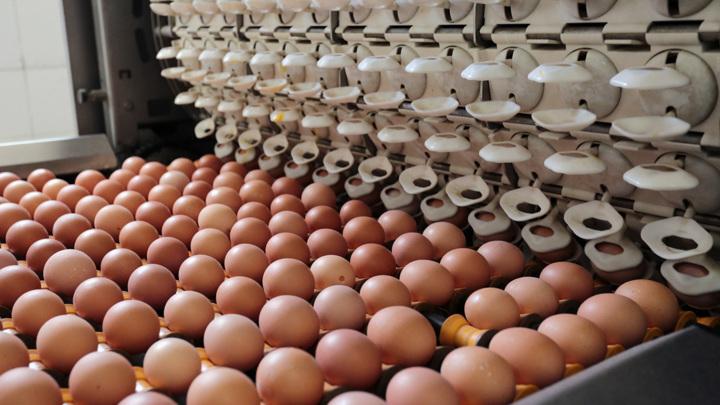 Россияне отмечают заметный рост цен на яйца