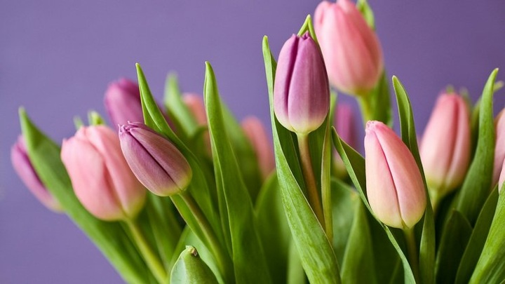 Мишустин поздравил сотрудниц НГУ с 8 Марта и подарил им цветы