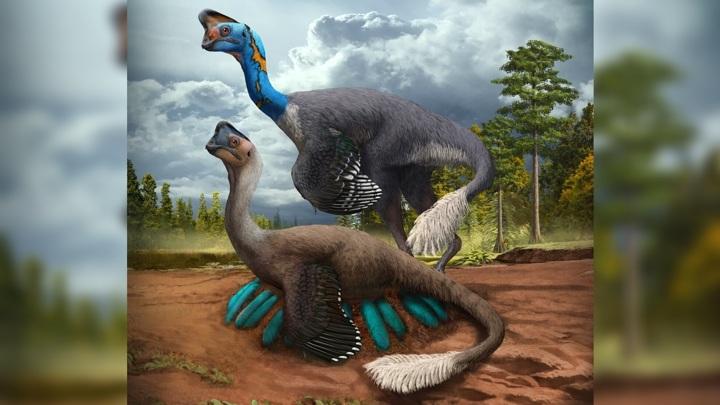 Некоторые динозавры высиживали яйца, как птицы.