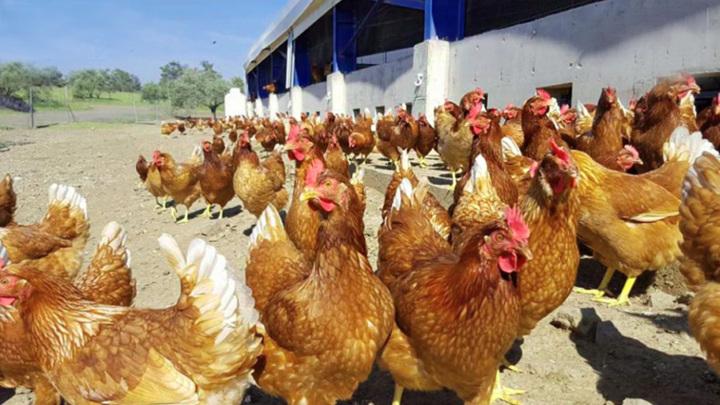 Гинцбург сравнил опасность коронавируса и птичьего гриппа