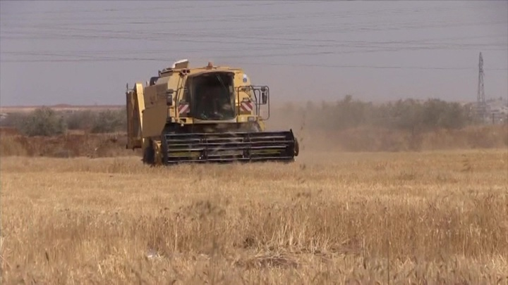 Посольство РФ в Вашингтоне: военные США воруют пшеницу на полях Сирии