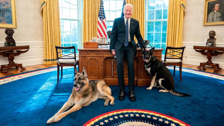 В Белый дом вернулись овчарки Джо Байдена