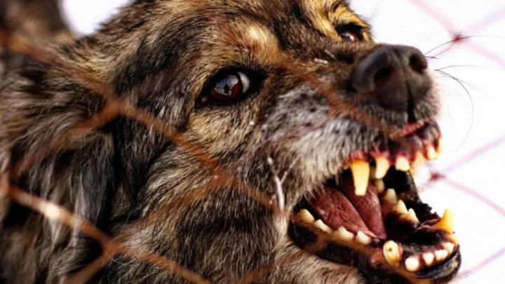 Бешенство выявили у домашней собаки в Нижегородской области