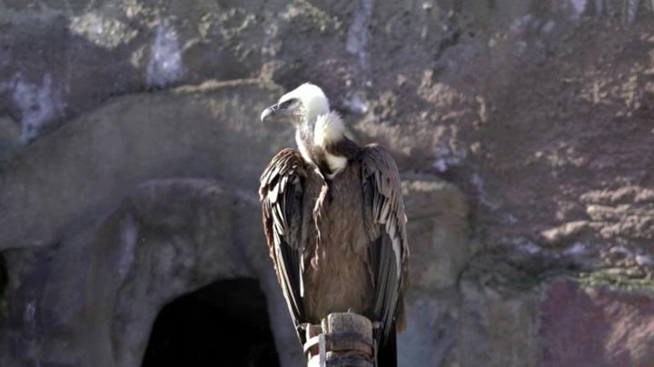 Небрежность или вредительство: перчатка посетителя зоопарка убила редкую птицу
